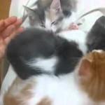 おぉ。。なんてかわゆいんだ。猫 – Secret Kitten