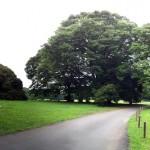 明治神宮の森へ散歩