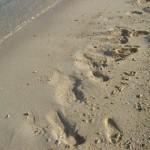 [番外編]もしも砂浜に・・