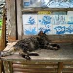 今帰仁城の猫