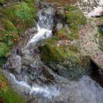めぐみの泉