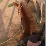 馬にのってどこまでも