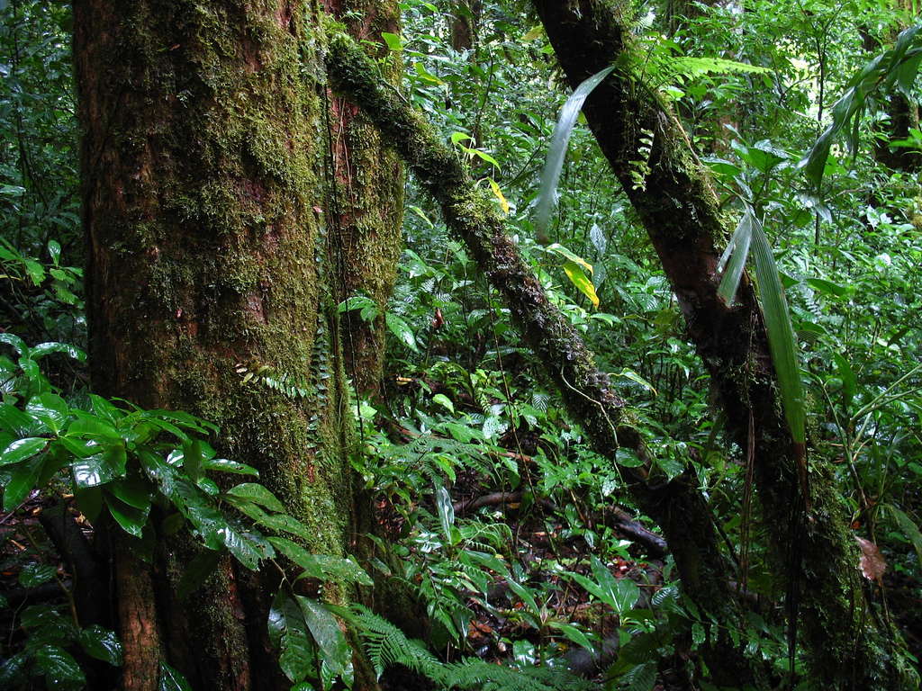 forest jungle photo