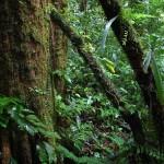 [読了]私は魔境に生きた―終戦も知らずニューギニアの山奥で原始生活十年