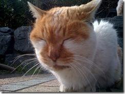 江ノ島の猫にゃん「太陽充電中」 じゃましないで。